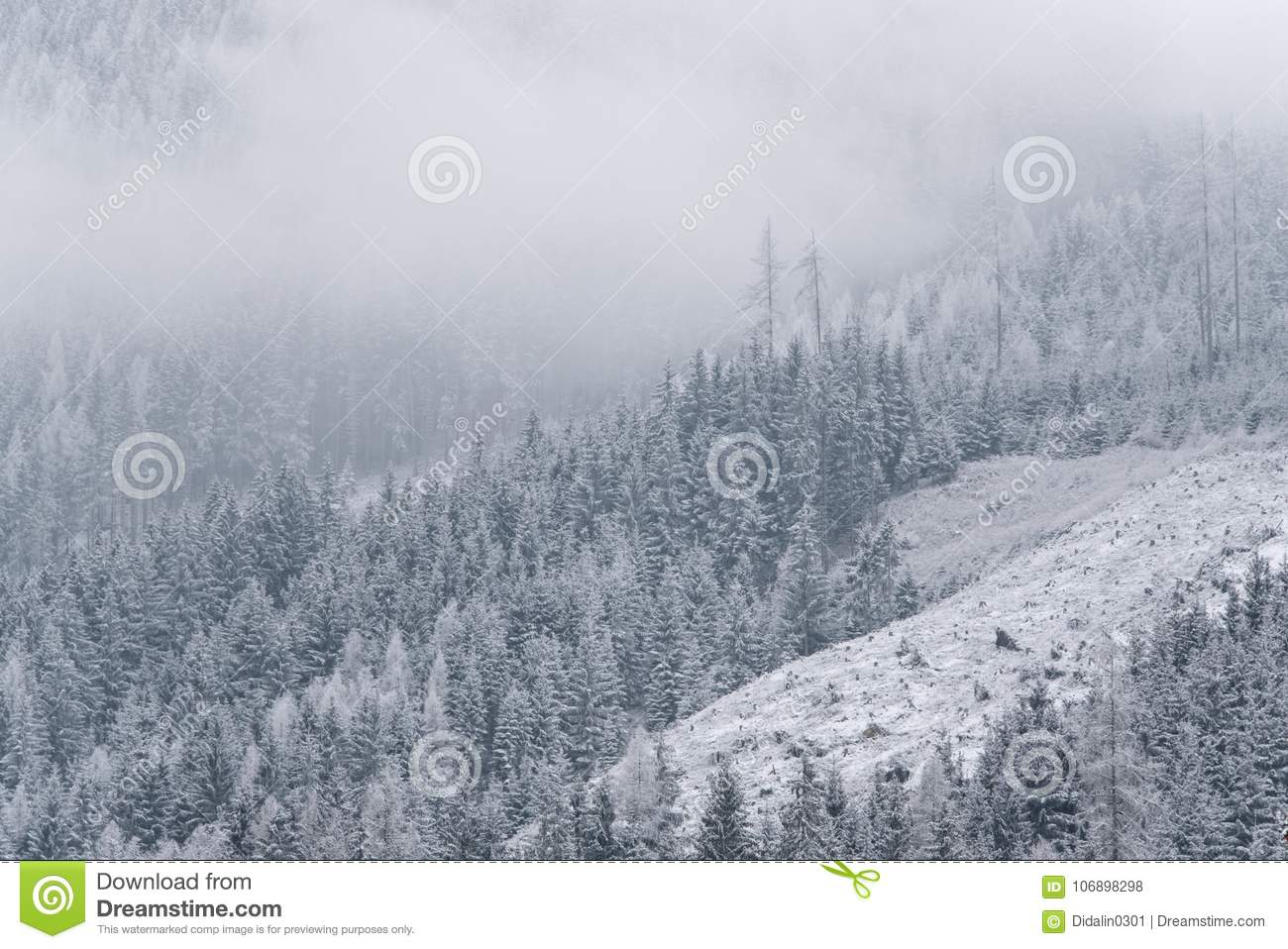 Winter Wallpaper Pine Trees Covered With Snow
