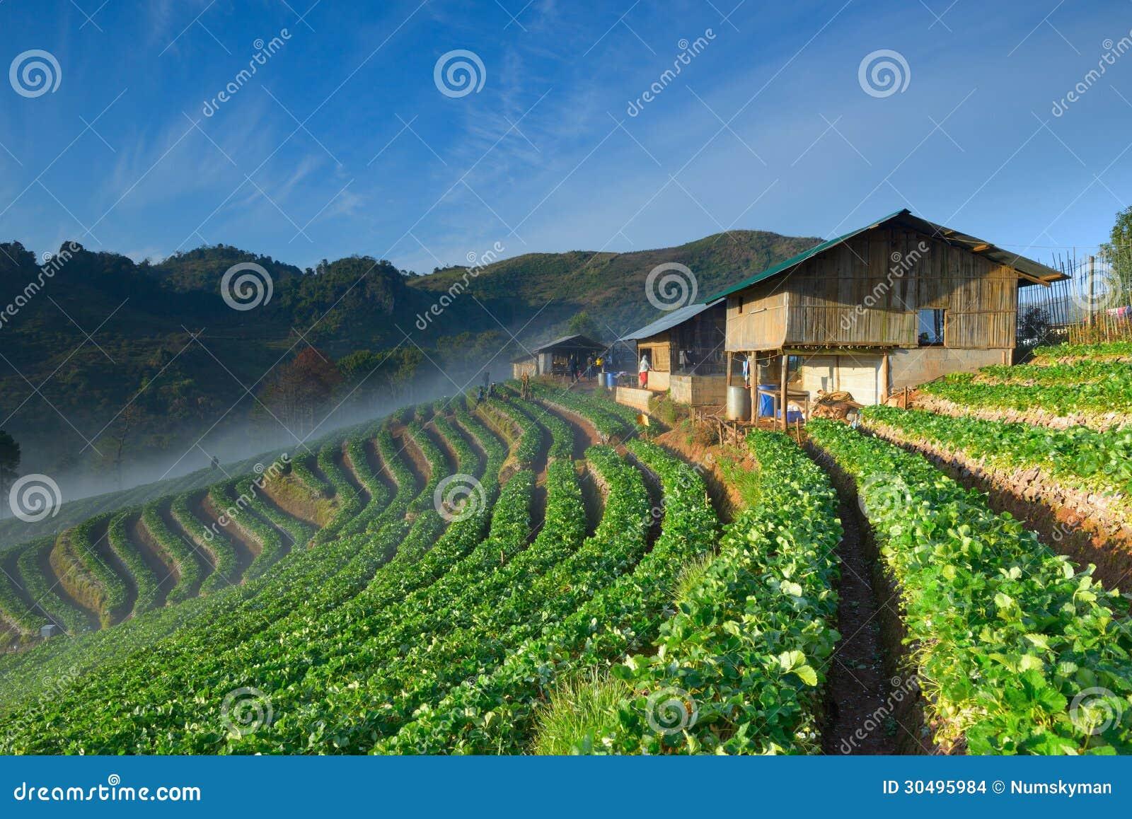 Mooi aardbeilandbouwbedrijf en Thais landbouwershuis op heuvel