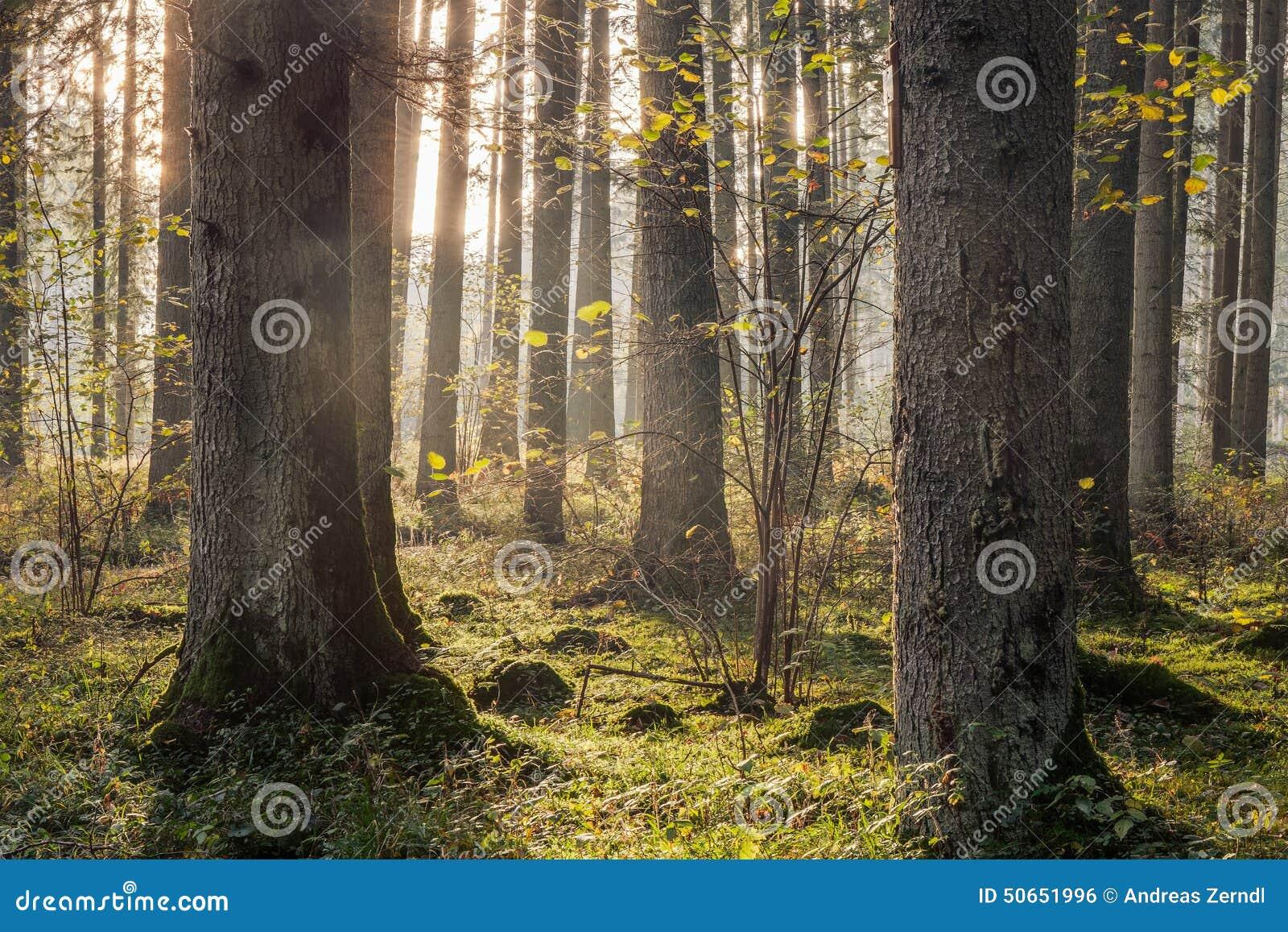 Mooi Autumn Forest