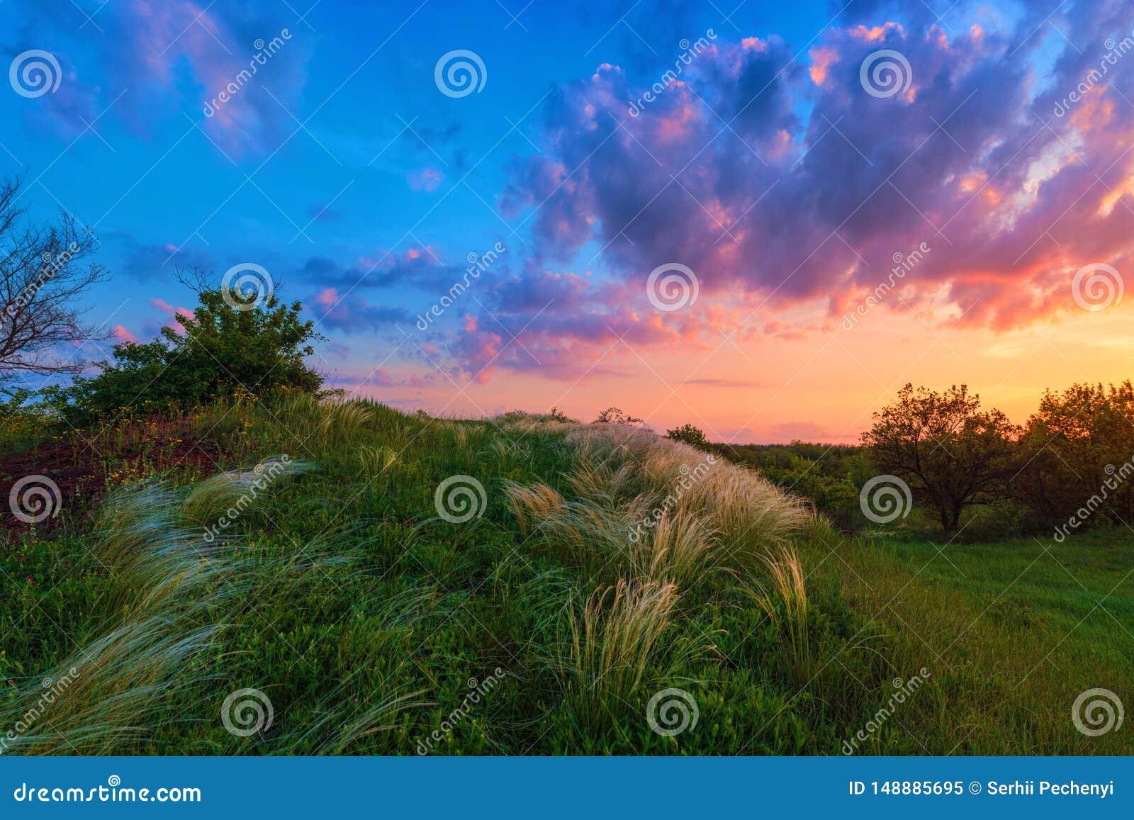Mooi beeld van zonsondergang over het pluimgrasgebied