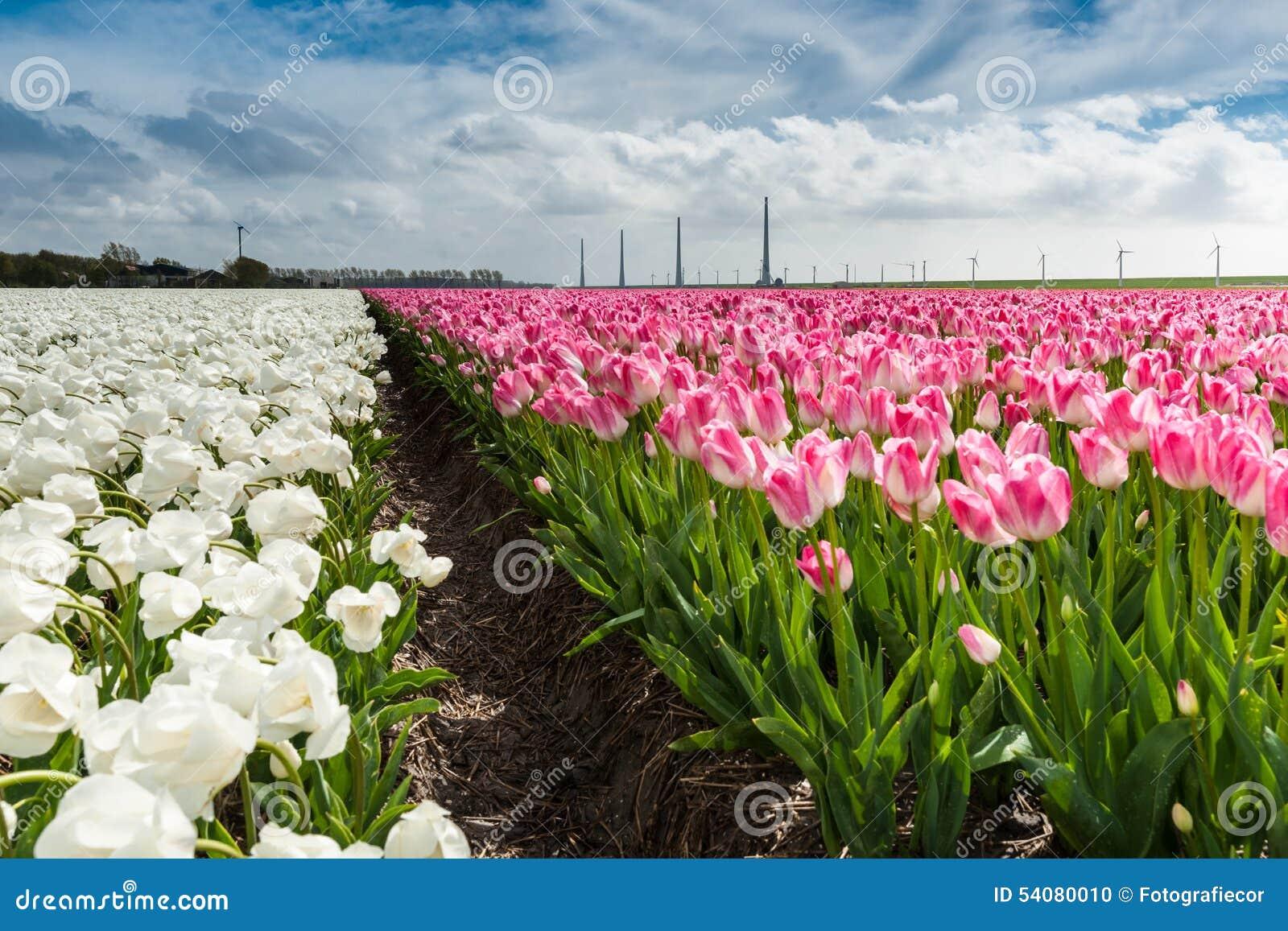 Mooi boeket van tulpen Kleurrijke tulpen tulpen in de lente s