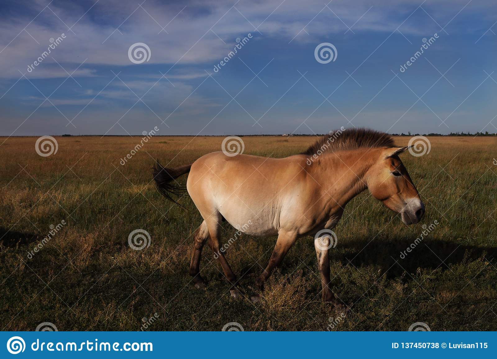 Mooi bruin paard die in de wildernis lopen