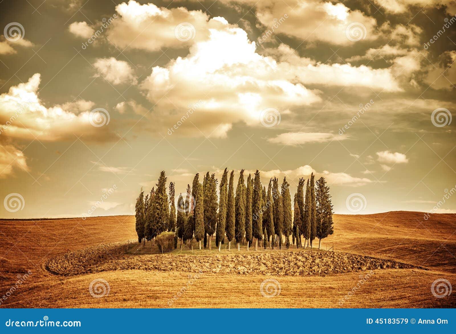 Mooi de herfst vinatge landschap