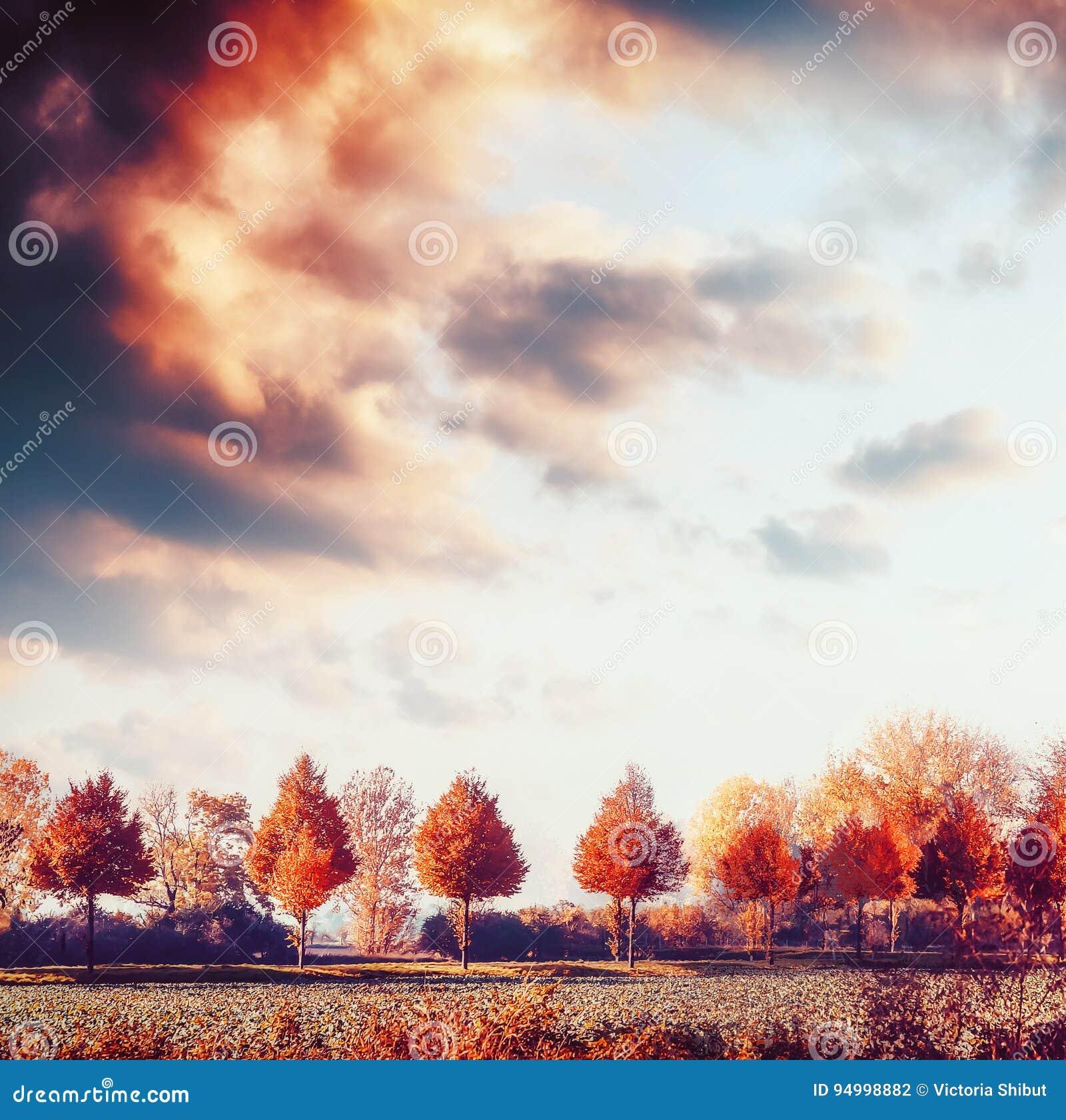 Mooi de herfstlandschap met bomen, gebied en hemel Dalings openluchtaard