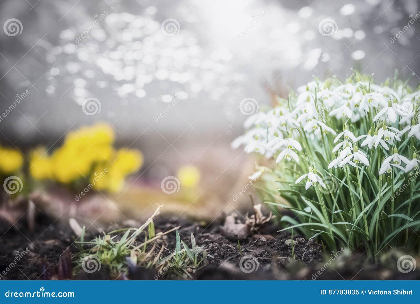 Mooi de lentetuin of park met sneeuwklokjesbloemen, openluchtaard