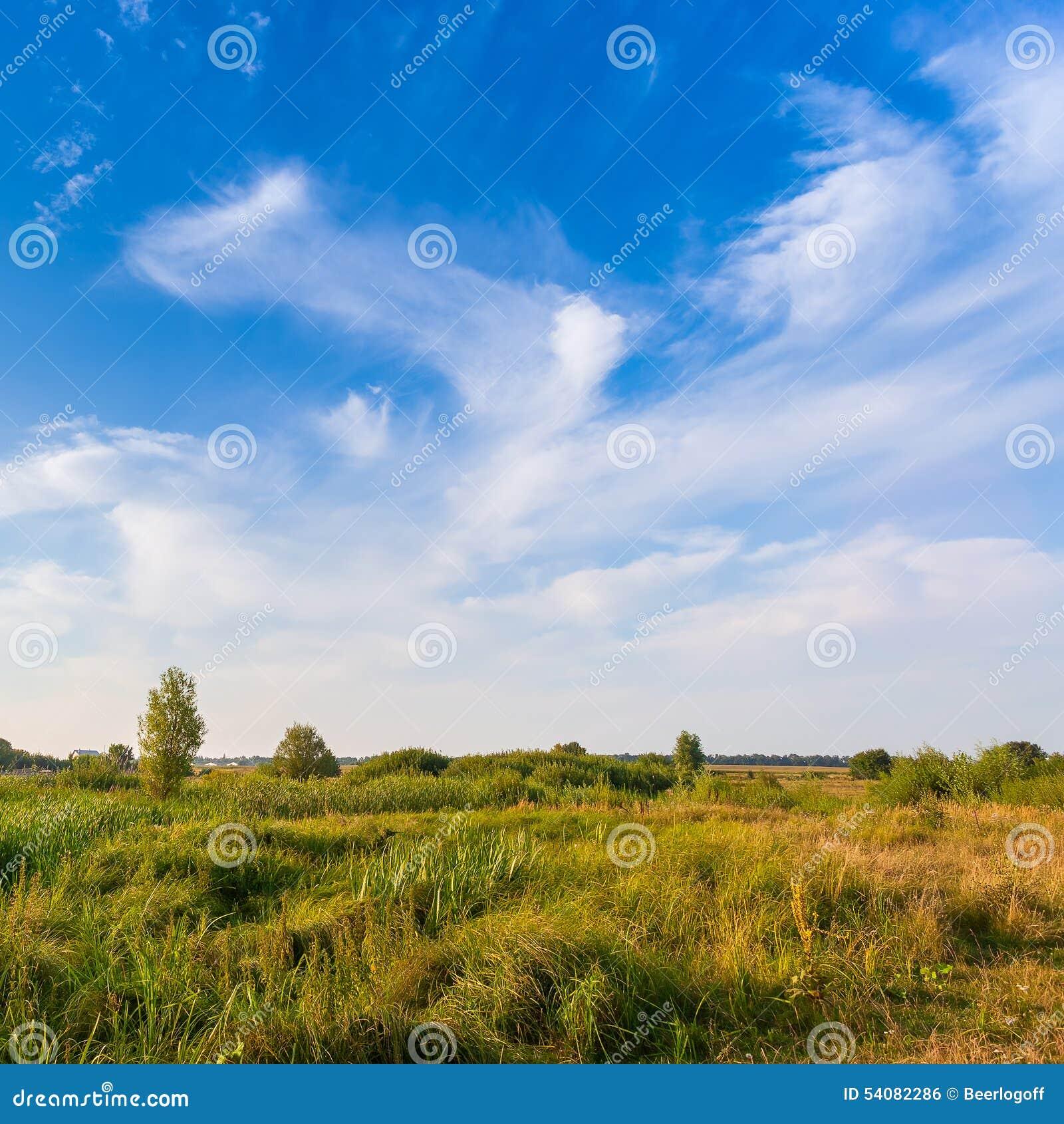 Mooi de zomerlandschap met gebied van groen gras