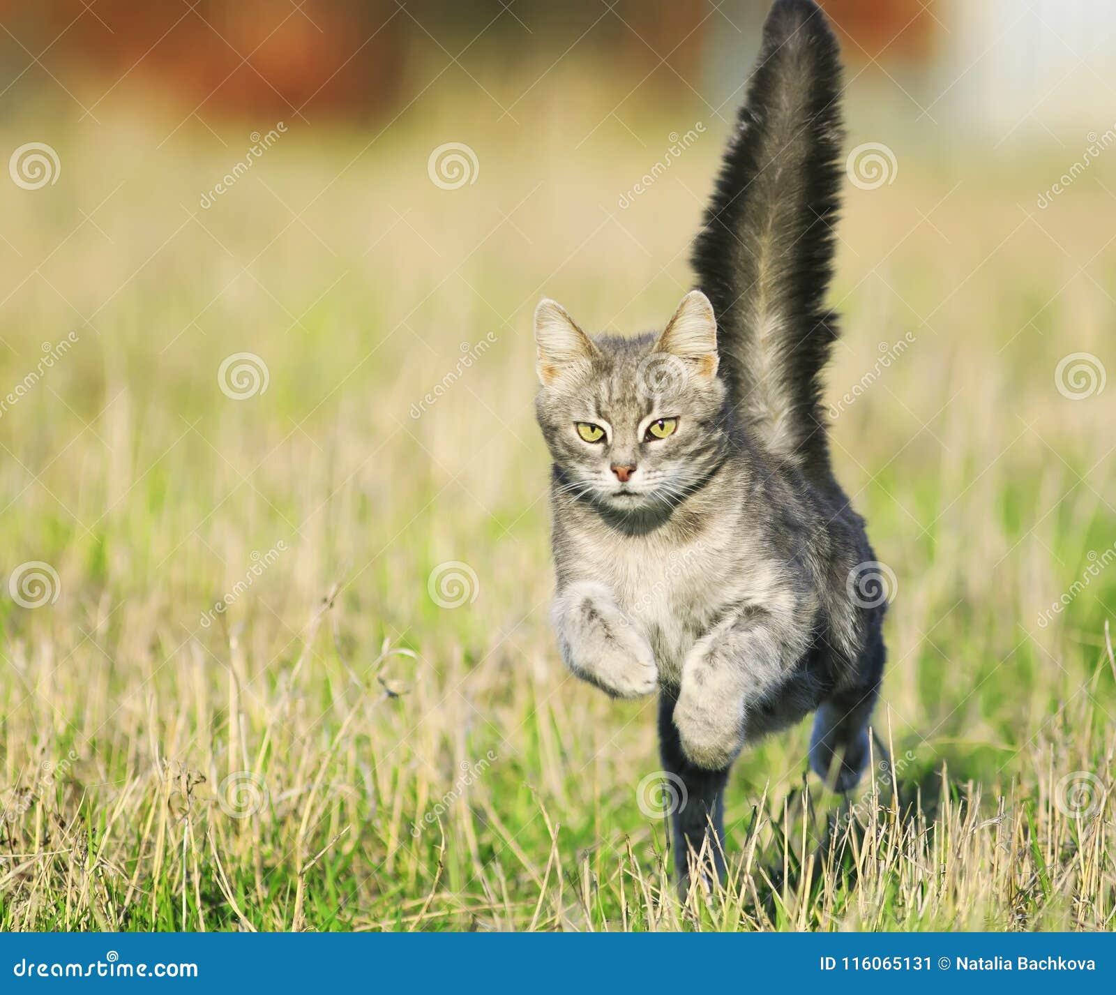 Mooi een tijger-gestreepte hals van de kattenpret op juffrouwopen plek hoogst podb
