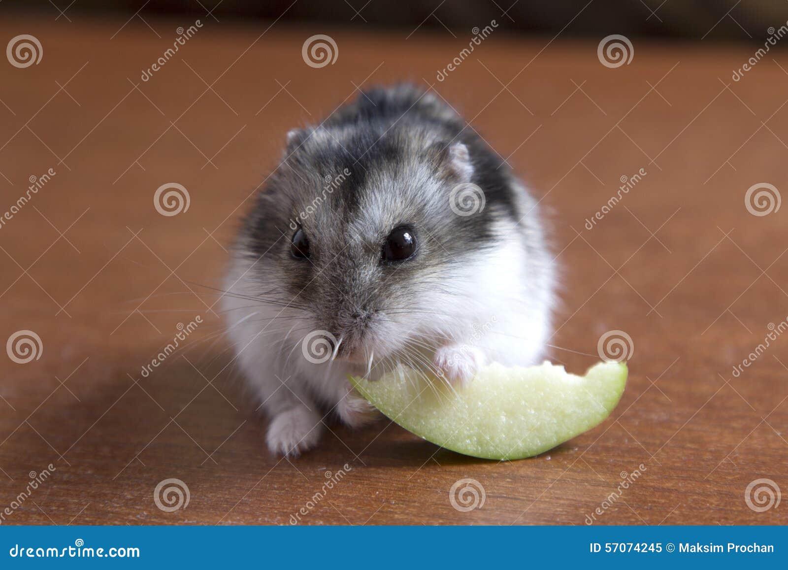 Mooi eet weinig hamsterzitting op de lijst en een noot