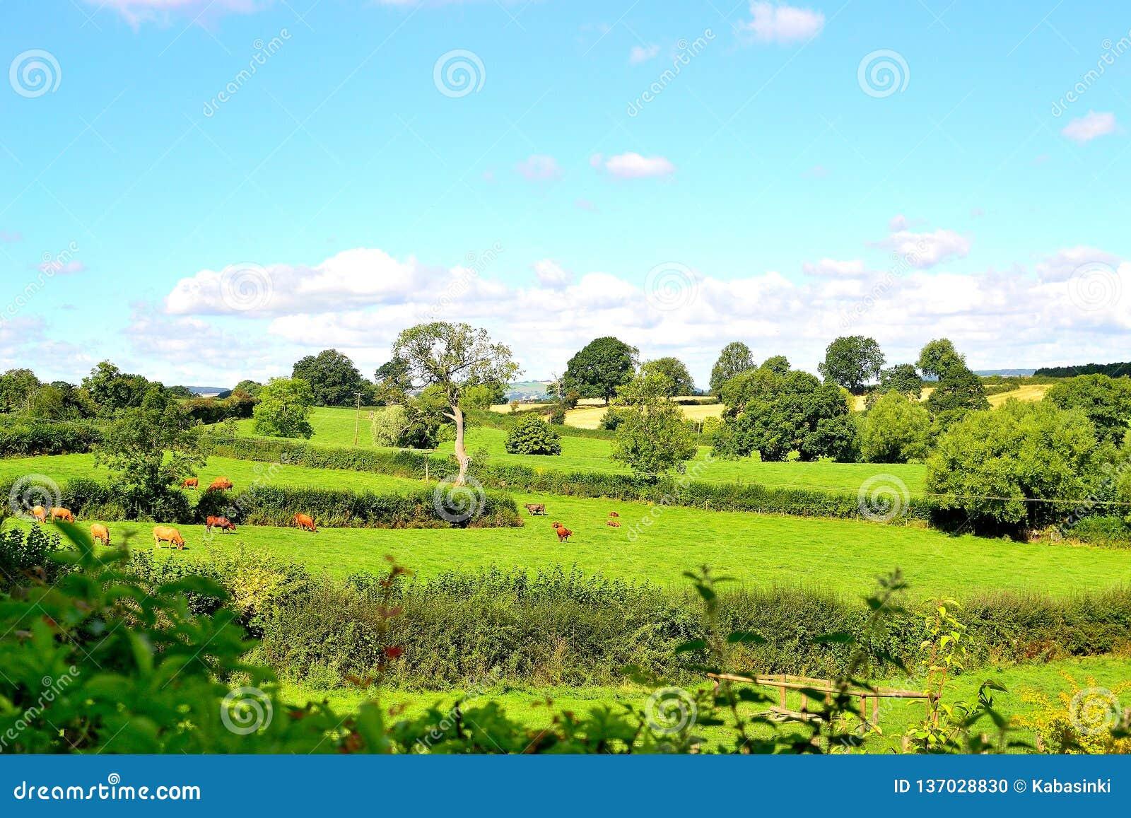 Mooi Engels plattelandslandschap in de zomer dichtbij Ludlow in Engeland