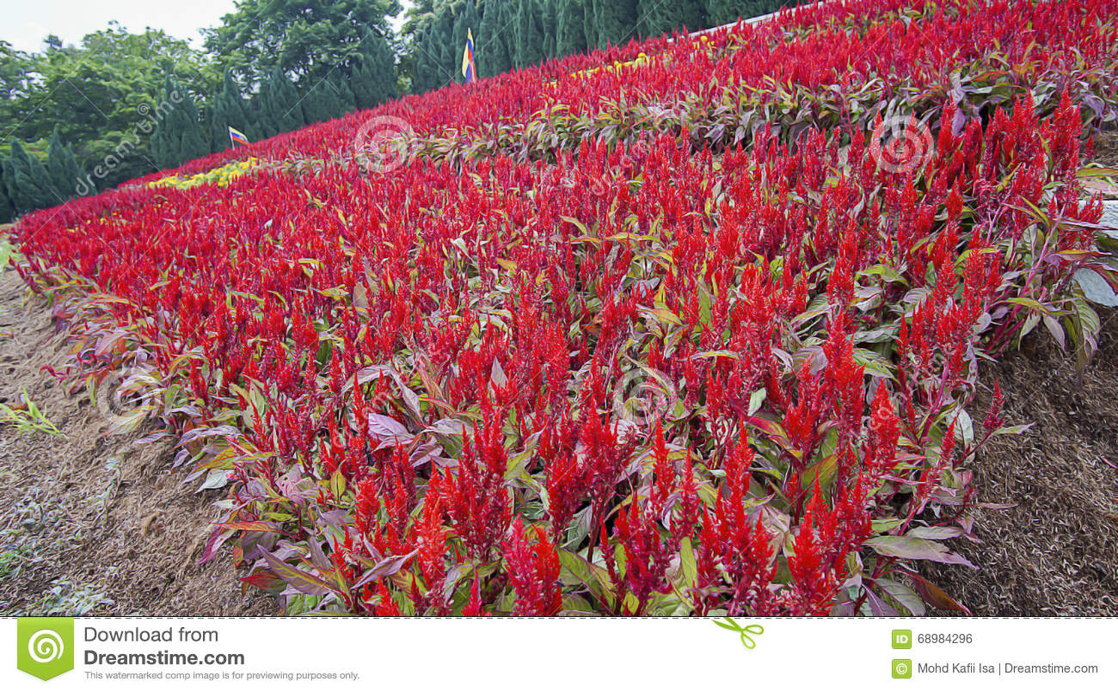 Mooi groen landschap in Putrajaya Maleisië