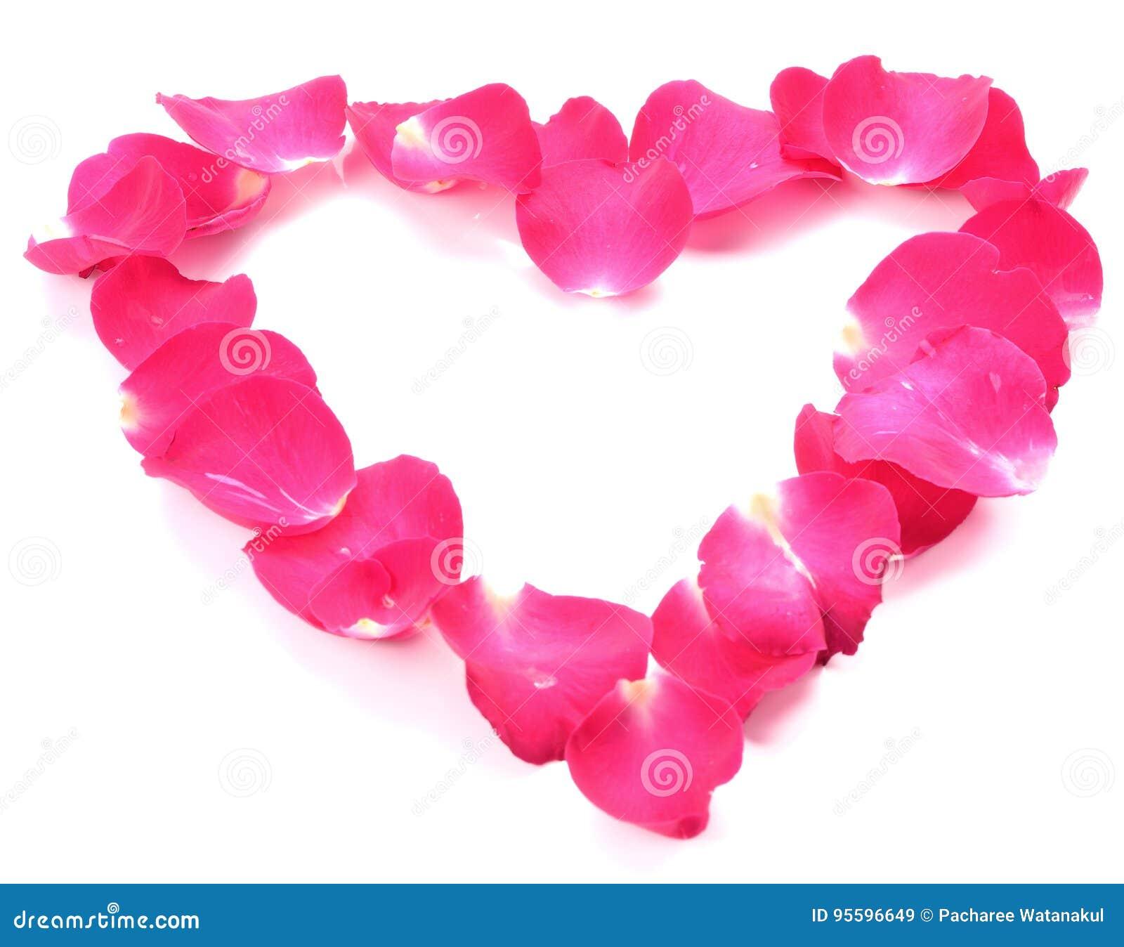 Mooi hart van roze roze die bloemblaadjes op wit worden geïsoleerd