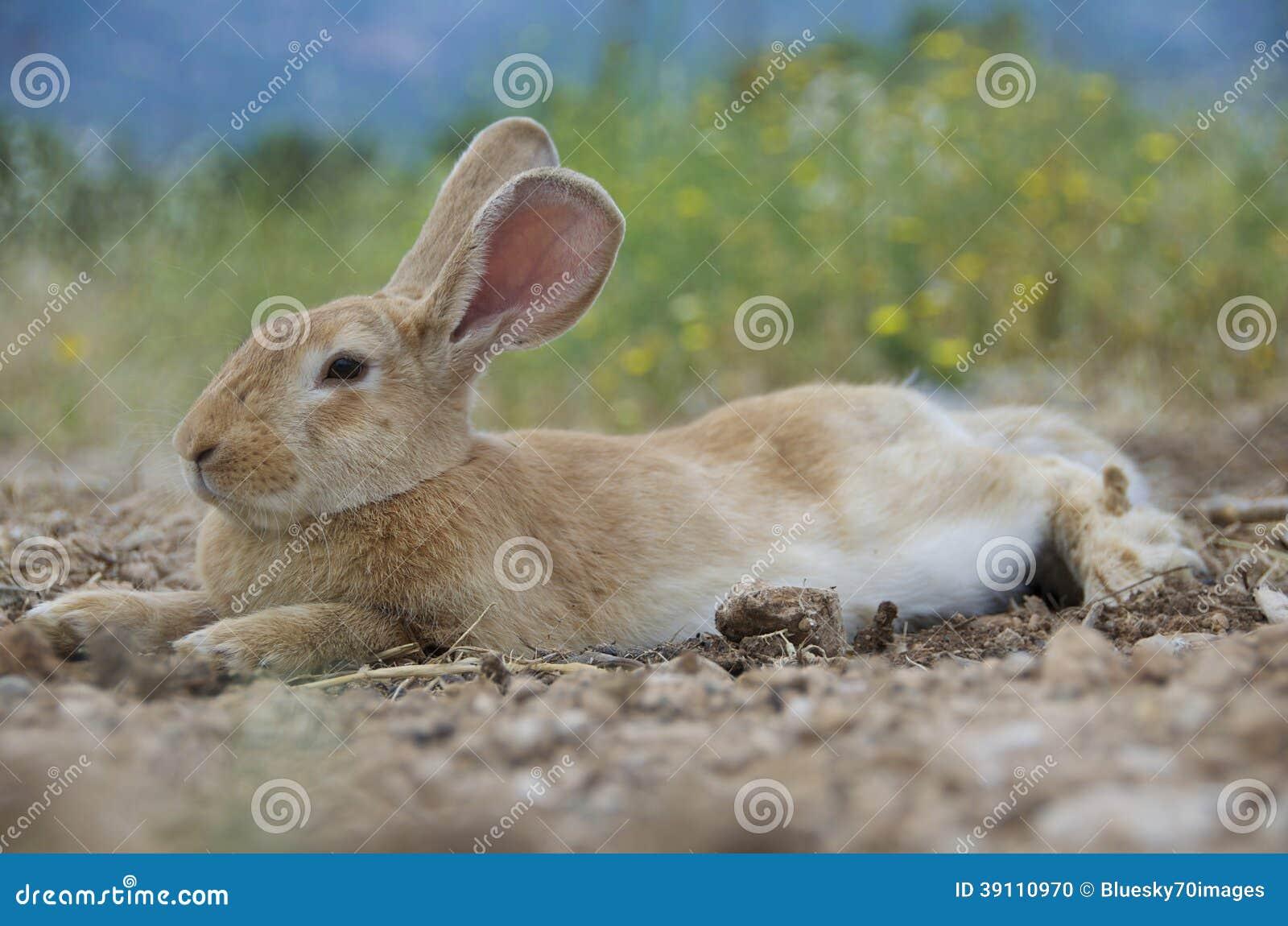 Mooi konijntje-Konijn