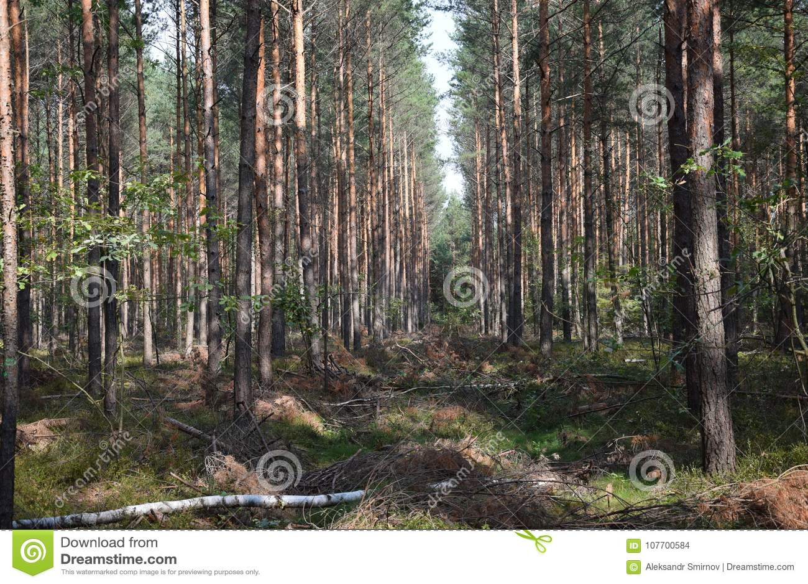 Download Mooi landschap Bosbosje stock foto. Afbeelding bestaande uit bomen - 107700584