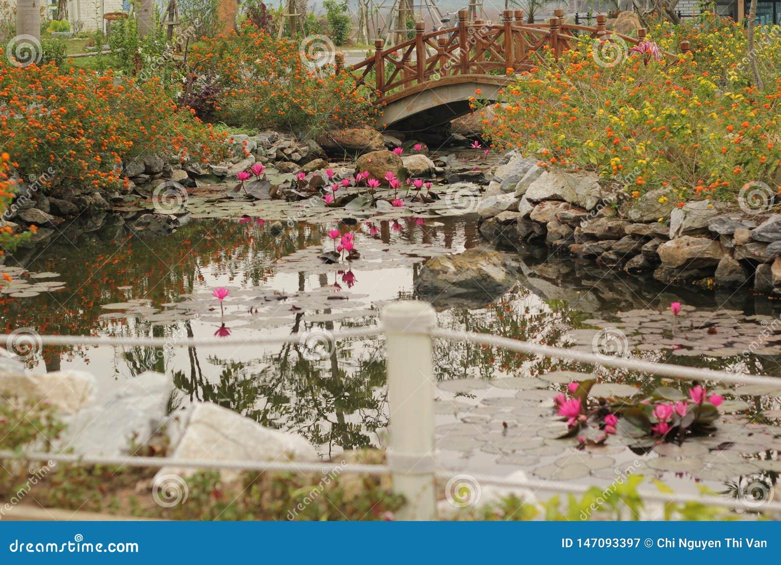 Mooi landschap met de roze lotusbloem van waterlelienymphaea in het meer