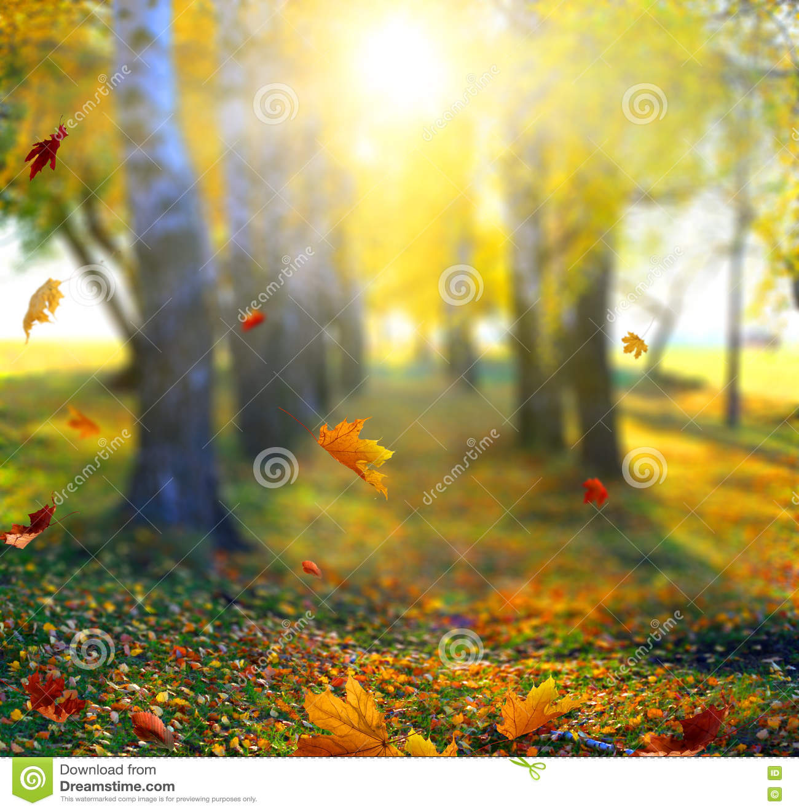 Mooi landschap met gele bomen, groene gras en zon