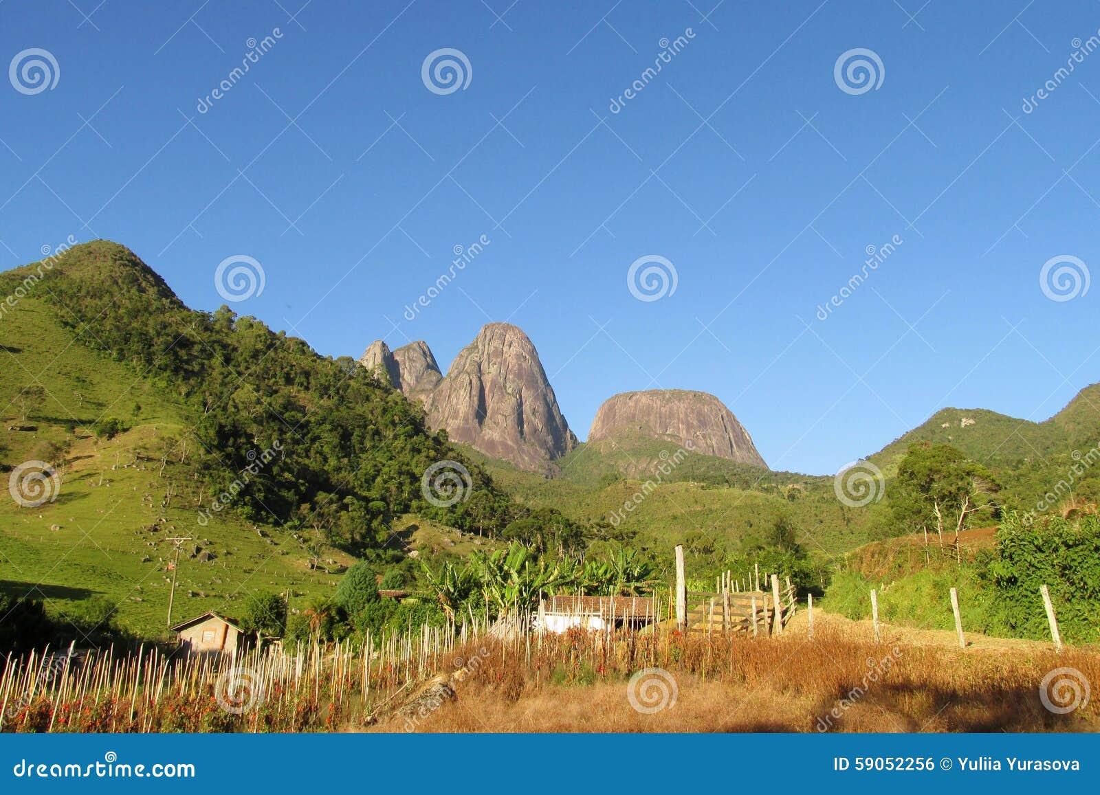 Mooi landschap van groen bos, gebied en vlotte rotsen