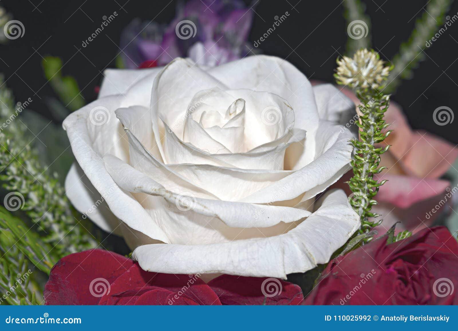 Mooi levend boeket van gemengde bloemen