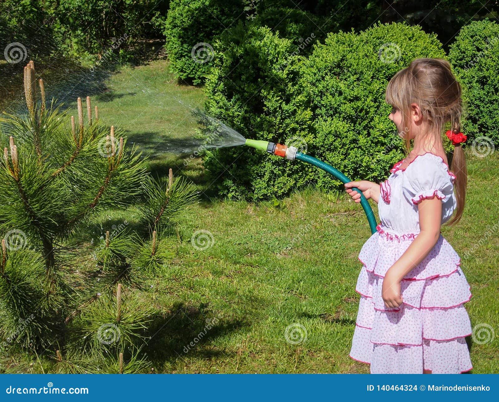 Mooi meisje 5 éénjarigen met lang blond haar in lovelly witte kleding die een kleine pijnboomboom in de tuin water geven