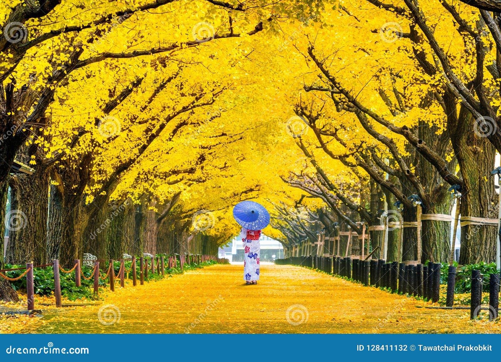 Mooi meisje die Japanse traditionele kimono dragen bij rij van gele ginkgoboom in de herfst De herfstpark in Tokyo, Japan