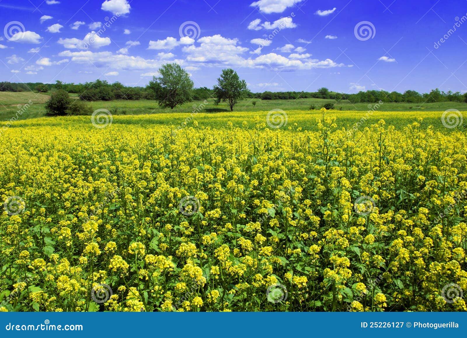 Mooi mosterdgebied