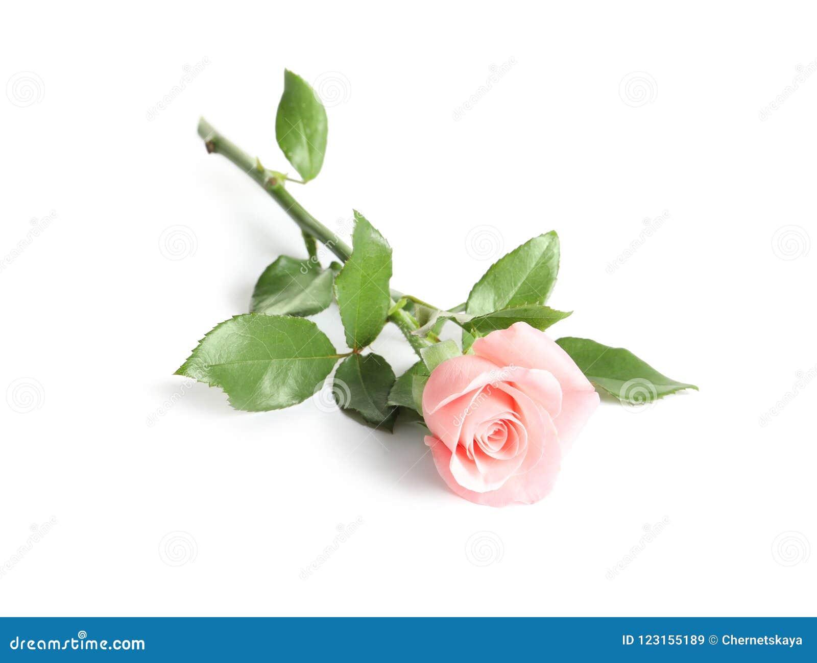 Mooi nam bloem toe