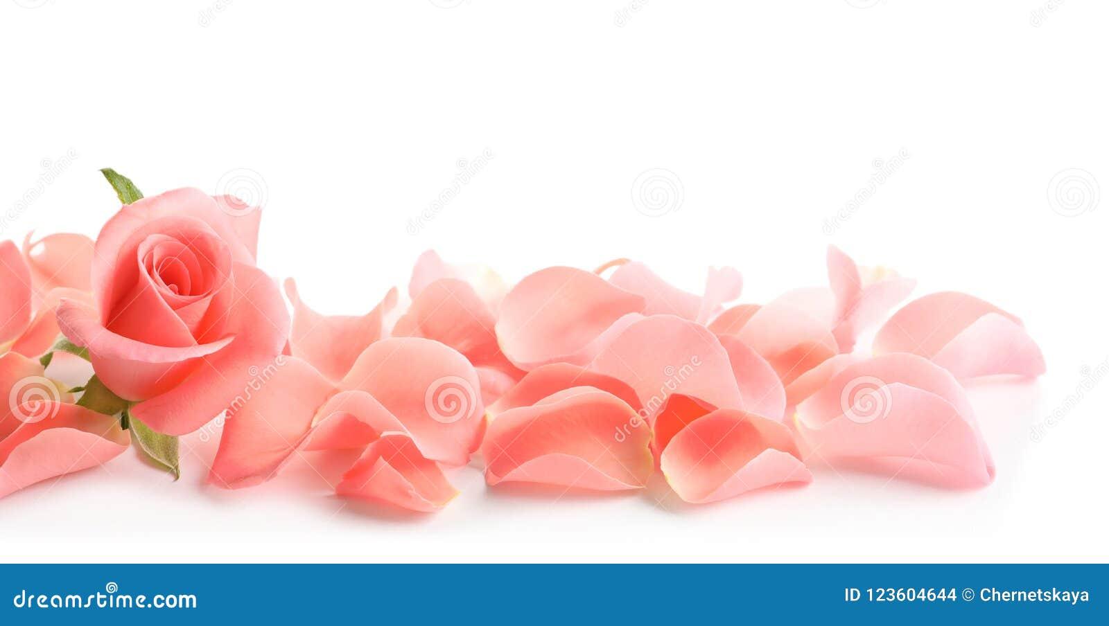 Mooi nam en bloemblaadjes toe