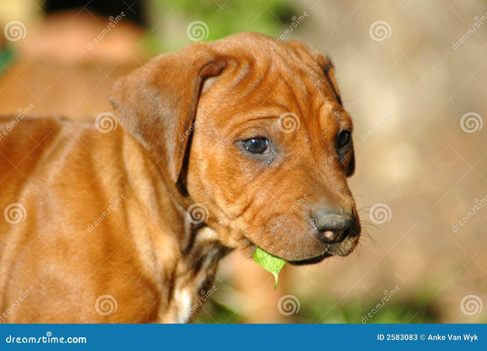 Mooi puppy