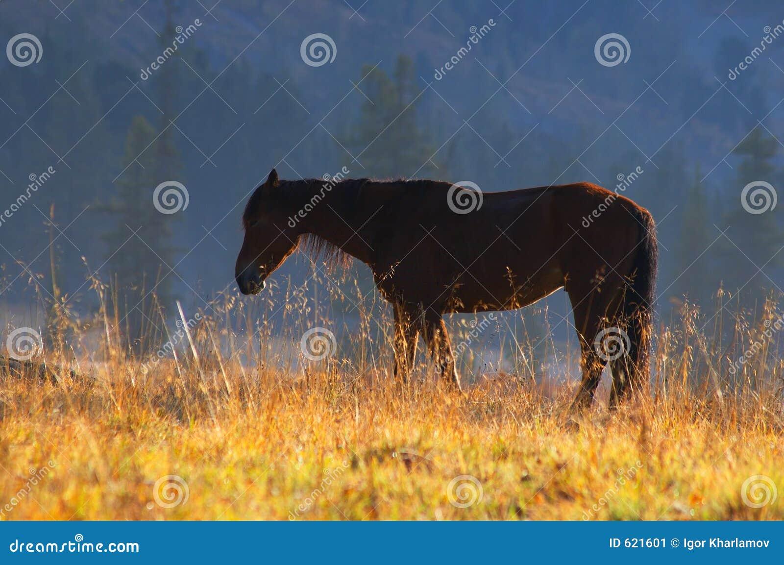 Mooi rood paard.