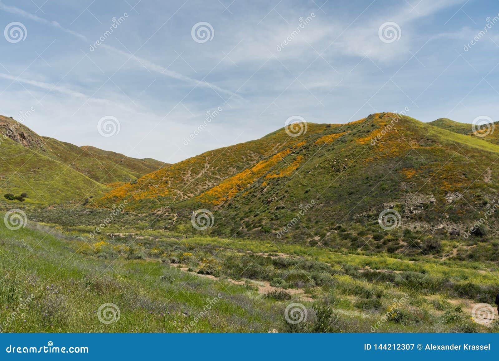 Mooi superbloomuitzicht in de Walker Canyon-bergketen dichtbij Meer Elsinore