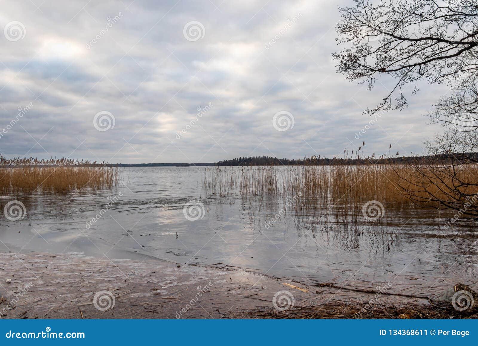 Mooi toneel rustig de winterlandschap van ijs, water en riet tegen een bewolkte hemel