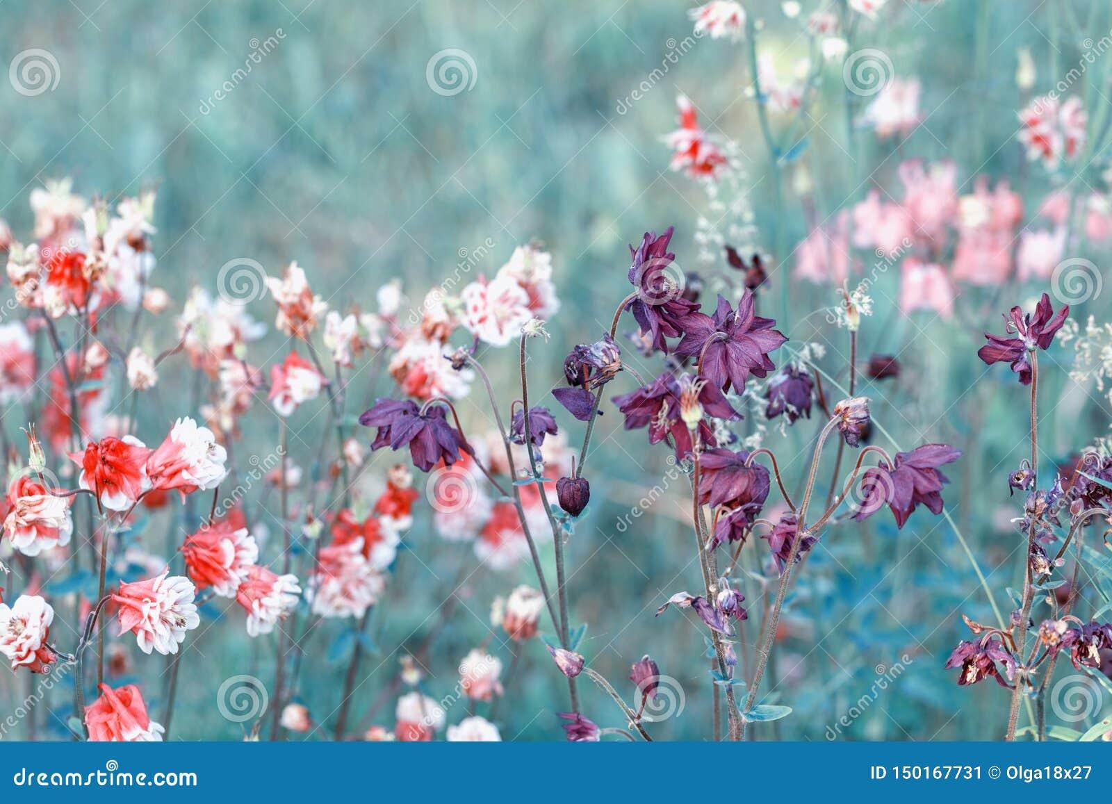Mooi weidegebied met wilde bloemen De lente of de zomerwildflowersclose-up Het concept van de gezondheidszorg