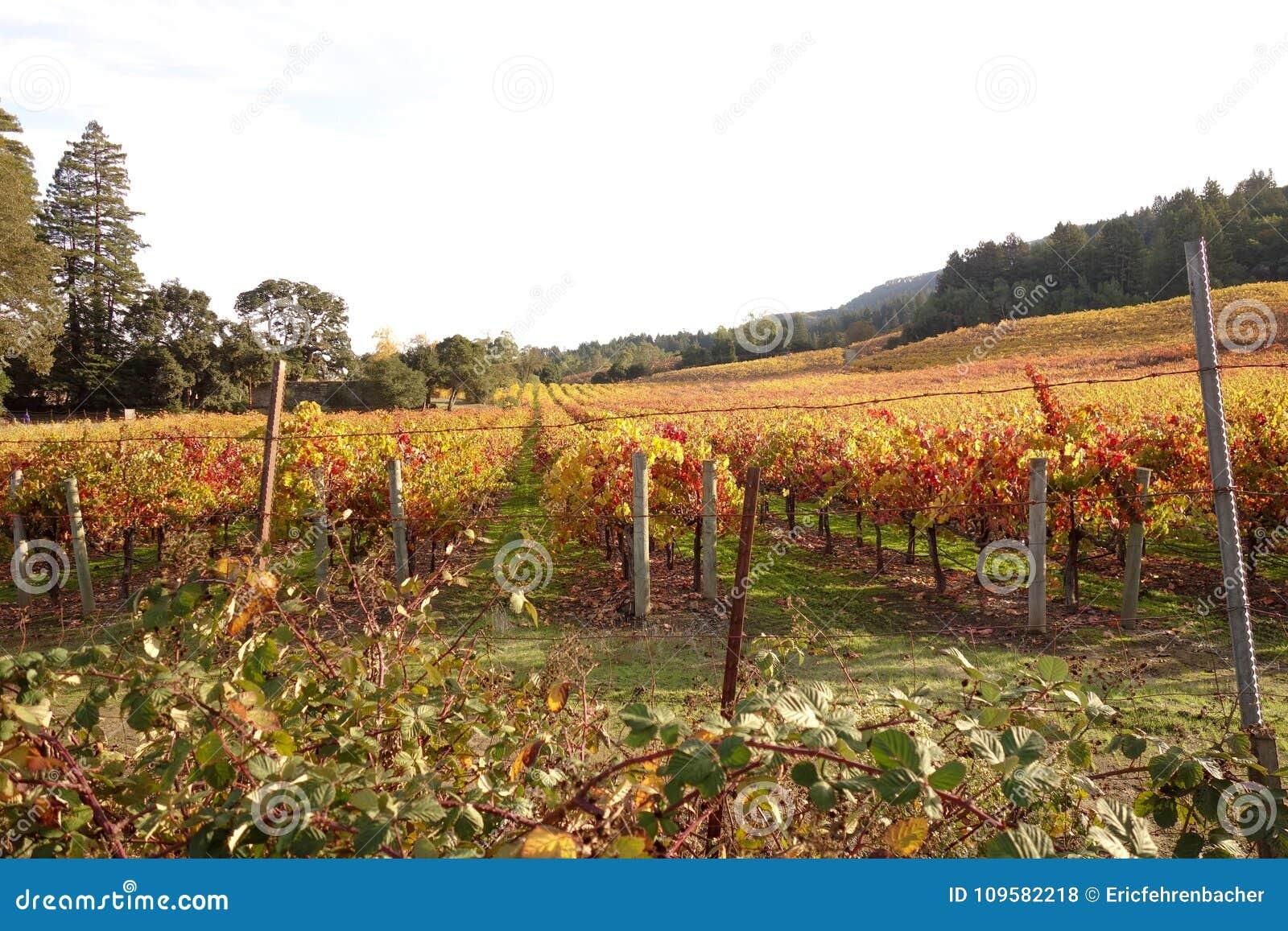 Mooi wijngaardgebied in Sonoma-Vallei, Californië