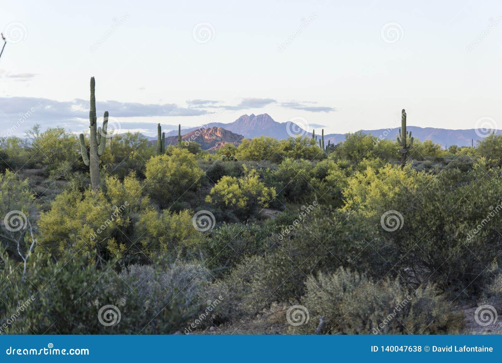 Mooi Woestijngebladerte dichtbij Bijgeloofbergen, Apache-Verbinding Arizona