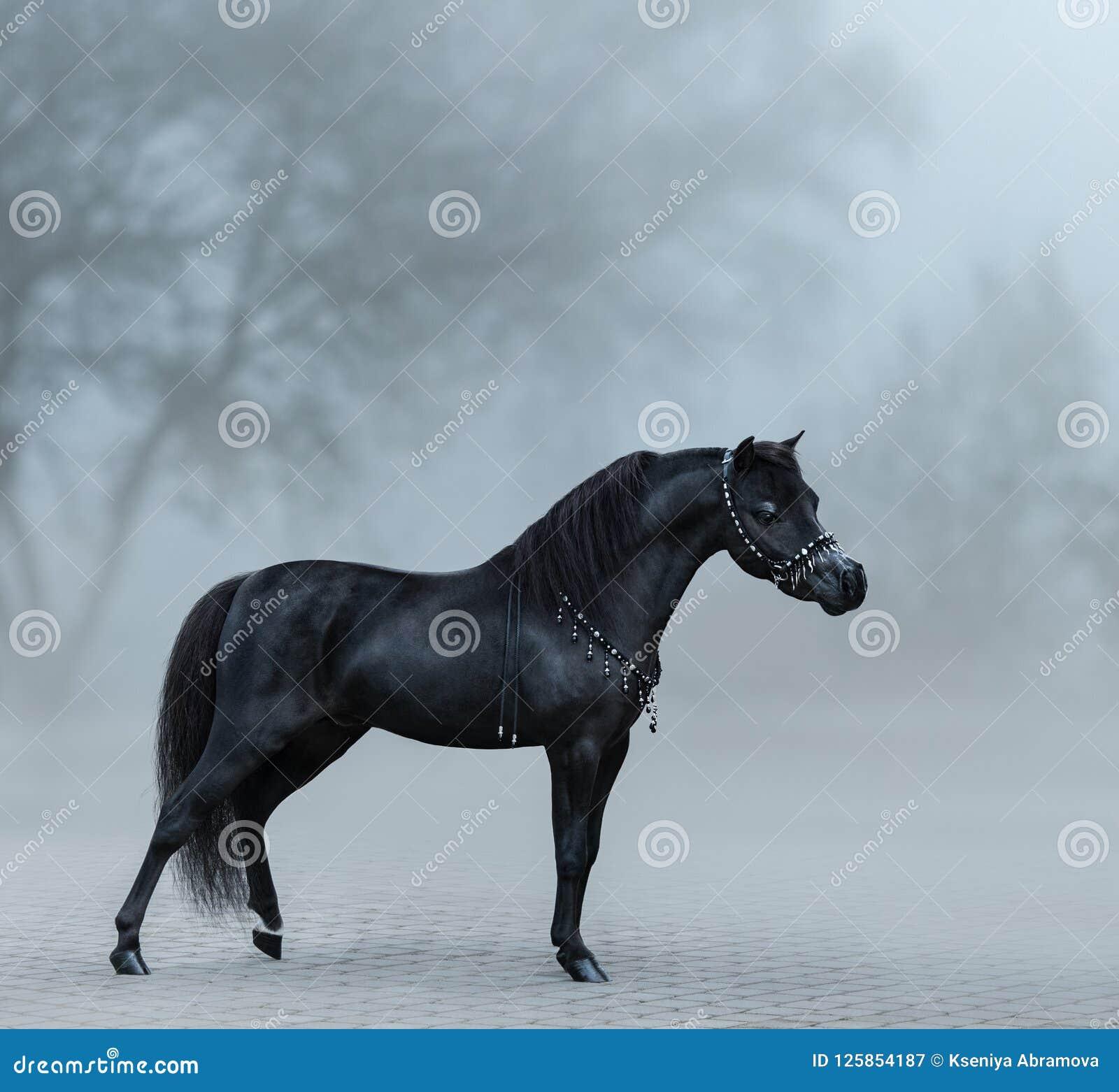 Mooi zwart miniatuurpaard die zich in mist bevinden