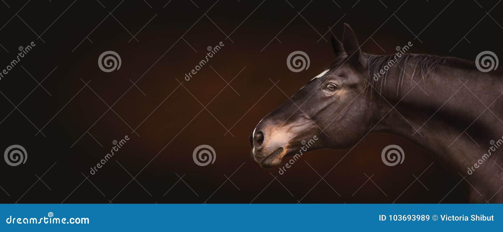 Mooi zwart paardhoofd, portret in profiel die, expressionally de camera op donkere achtergrond, plaats voor tekst, banner bekijke