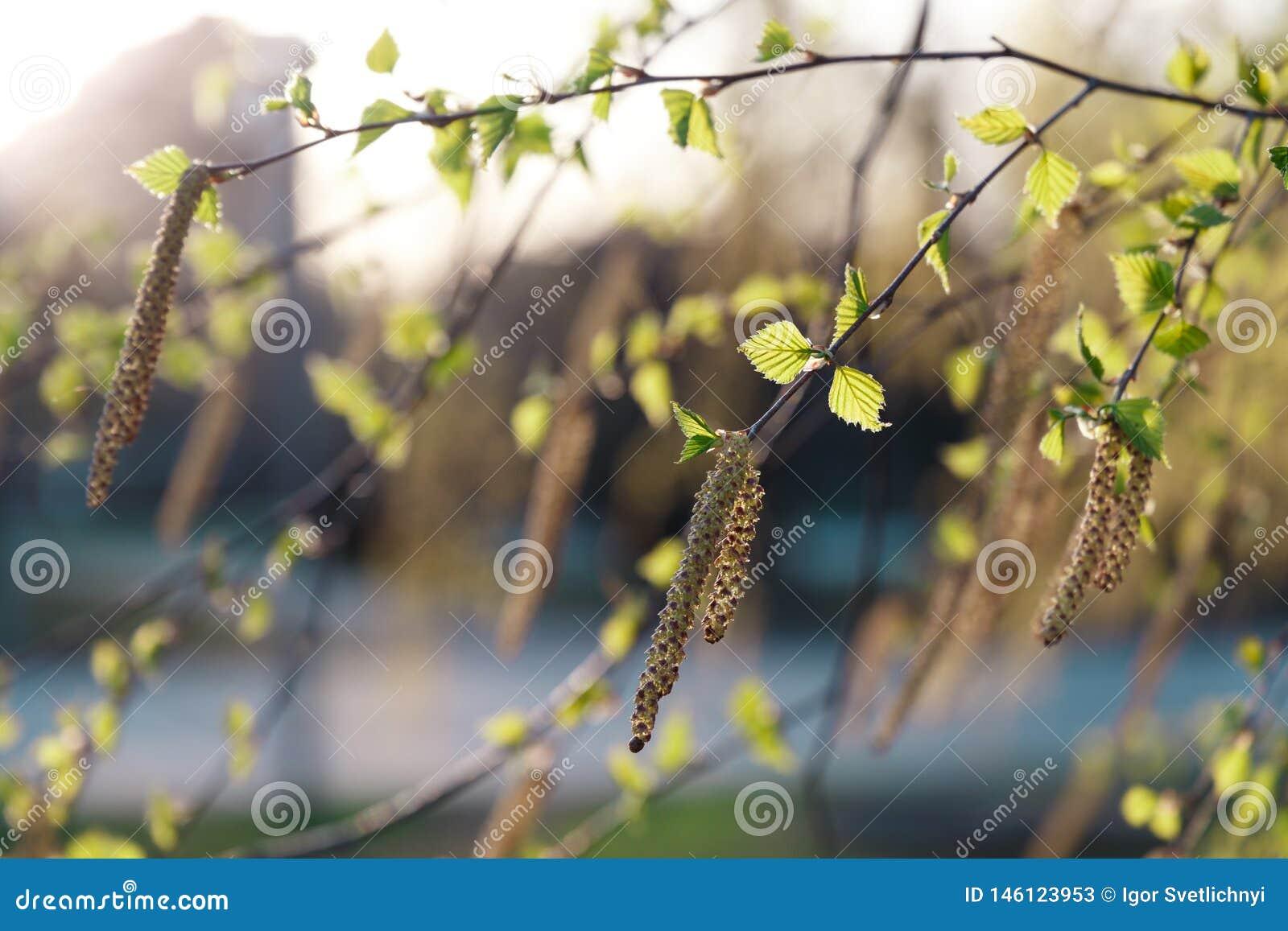 Mooie aardachtergrond De zomer, de lenteconcepten