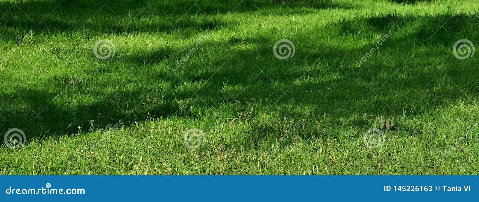 Mooie achtergrond met heldergroen gras op het gazon