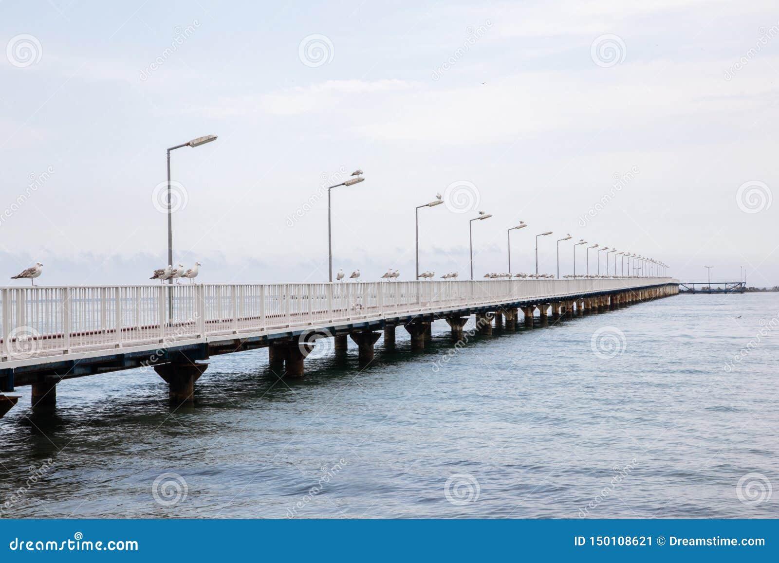 Mooie achtergrond van een pijler met zeemeeuwen, kalme overzees en blauwe hemel