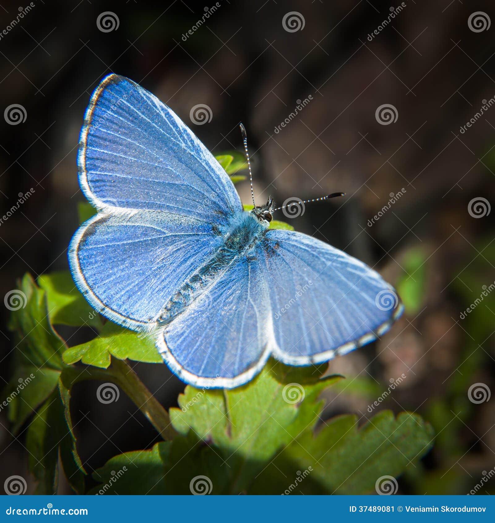 21 mooie kleurrijke vlinder - photo #32