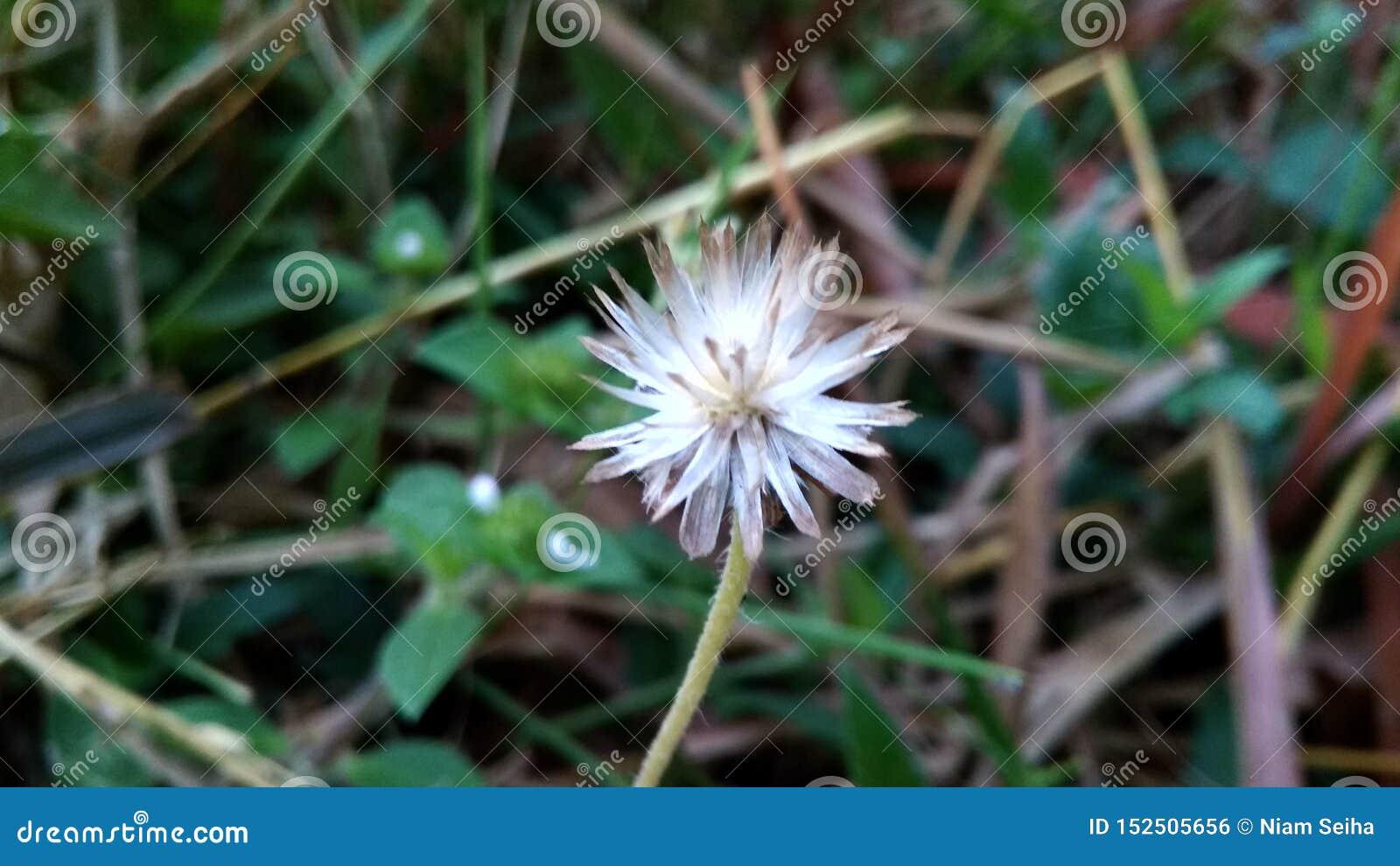 Mooie bloem coatbuttons in de tuin