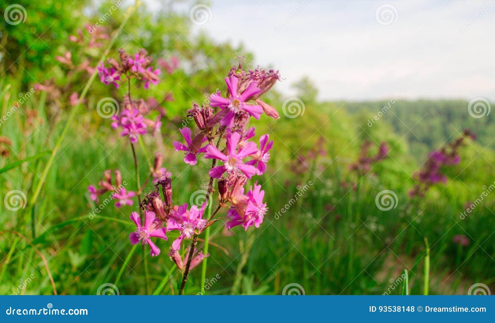Mooie bloem in de lente