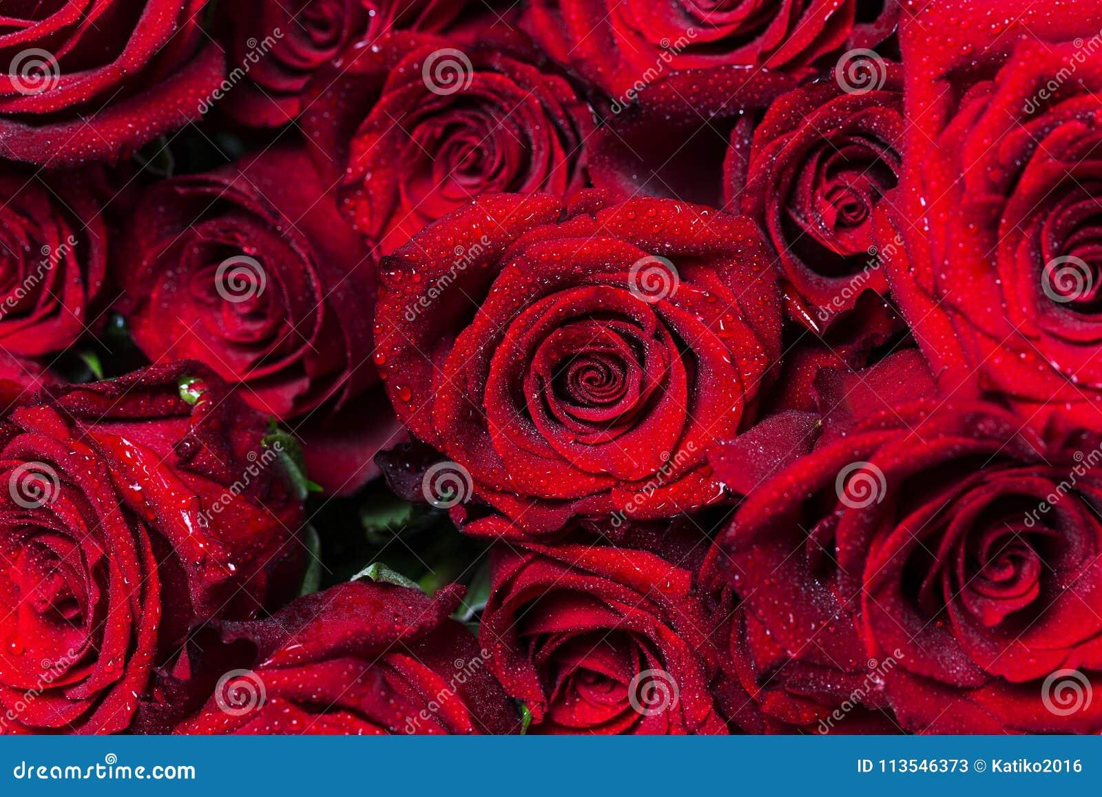 Mooie bloemen… achtergrond als achtergrond met kleurrijke bloemen Bos van grote levendige rode rozen met waterdalingen op hun blo