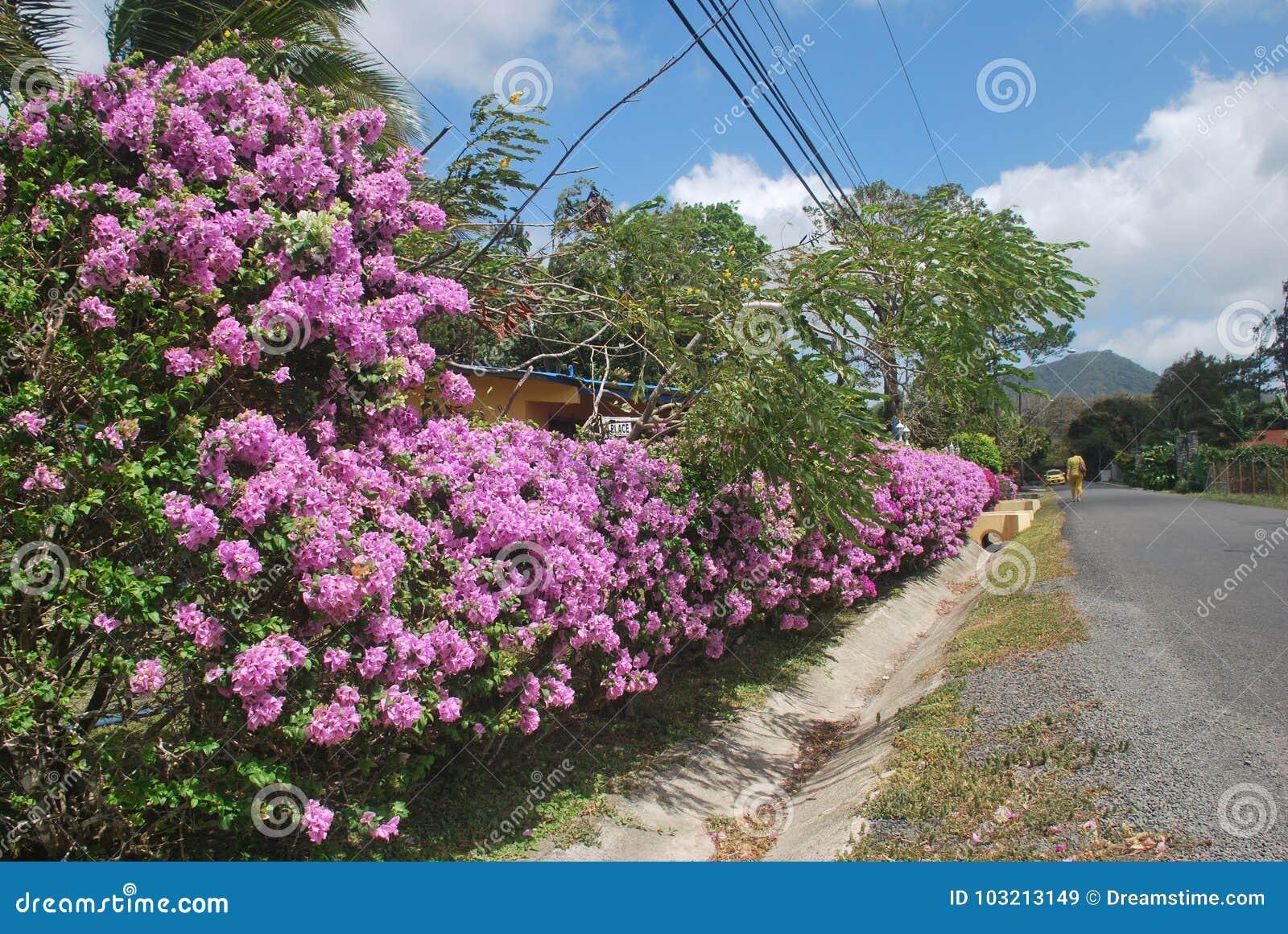 Mooie bloemen, die op een plattelandsgebied van †‹â€ ‹de Provincie van Panama worden gevangen valle DE Antà ³ n