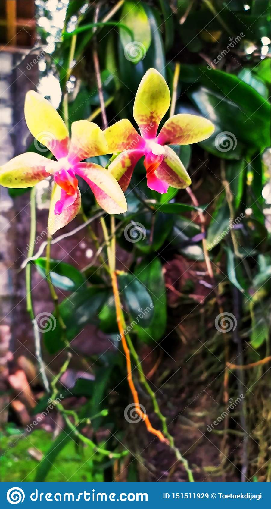 Mooie bloemen en installaties bij grandma& x27; s binnenplaatshuis 8