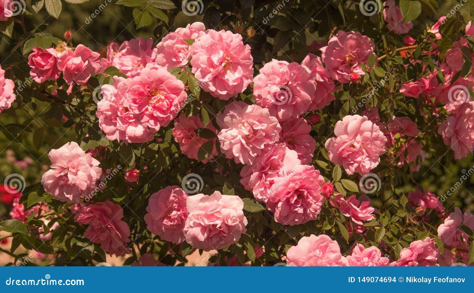 Mooie bloemen op het gebied