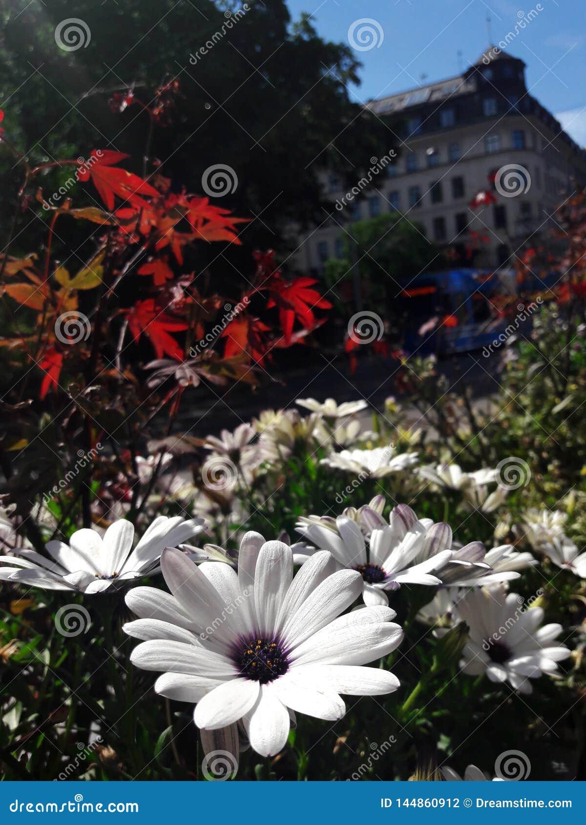 Mooie bloemen tegen de achtergrond van de Europese stad Stockholm, Zweden