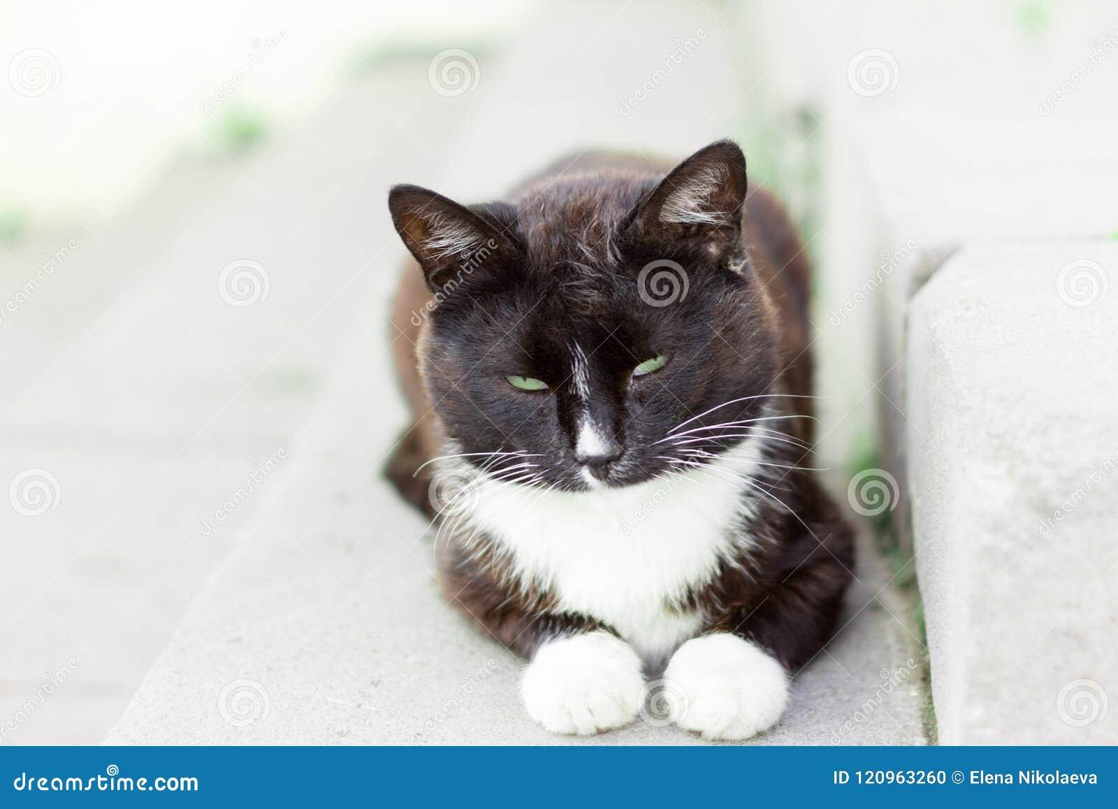 Mooie dakloze vuile kattenzitting op de portiek