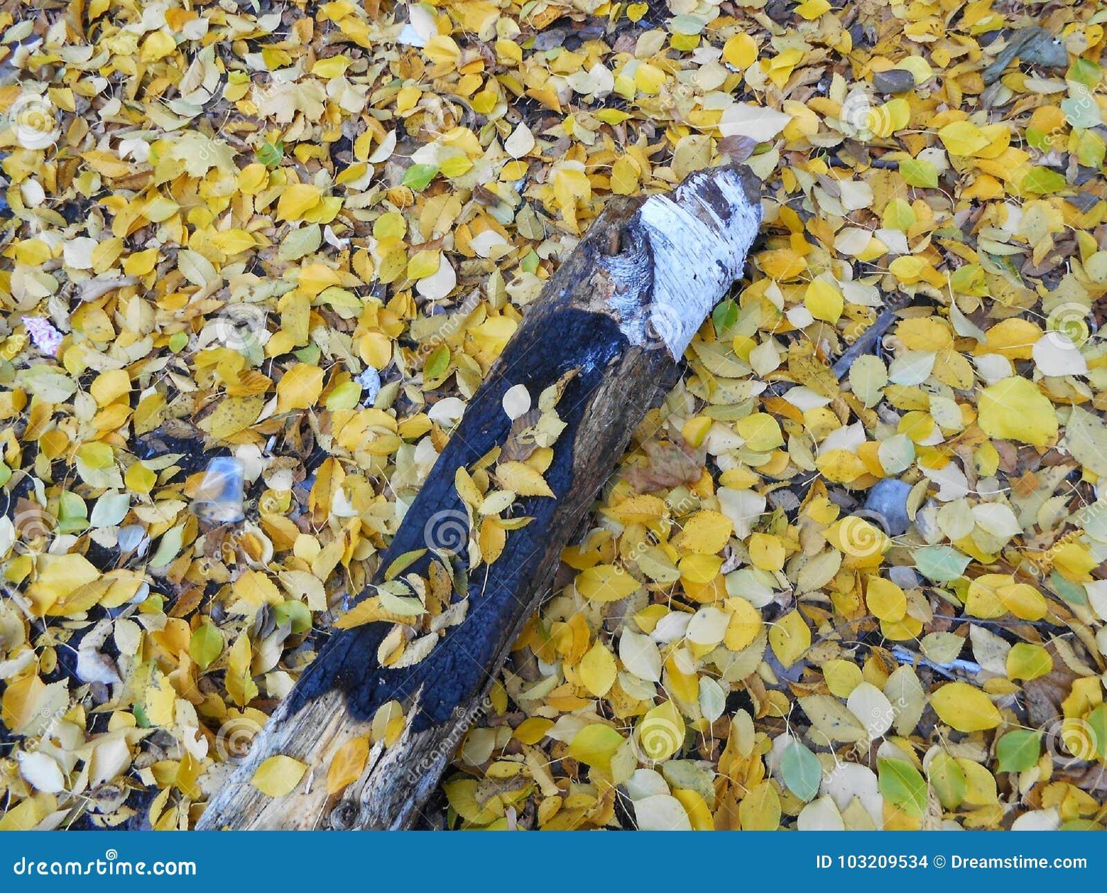 Mooie de herfstbladeren