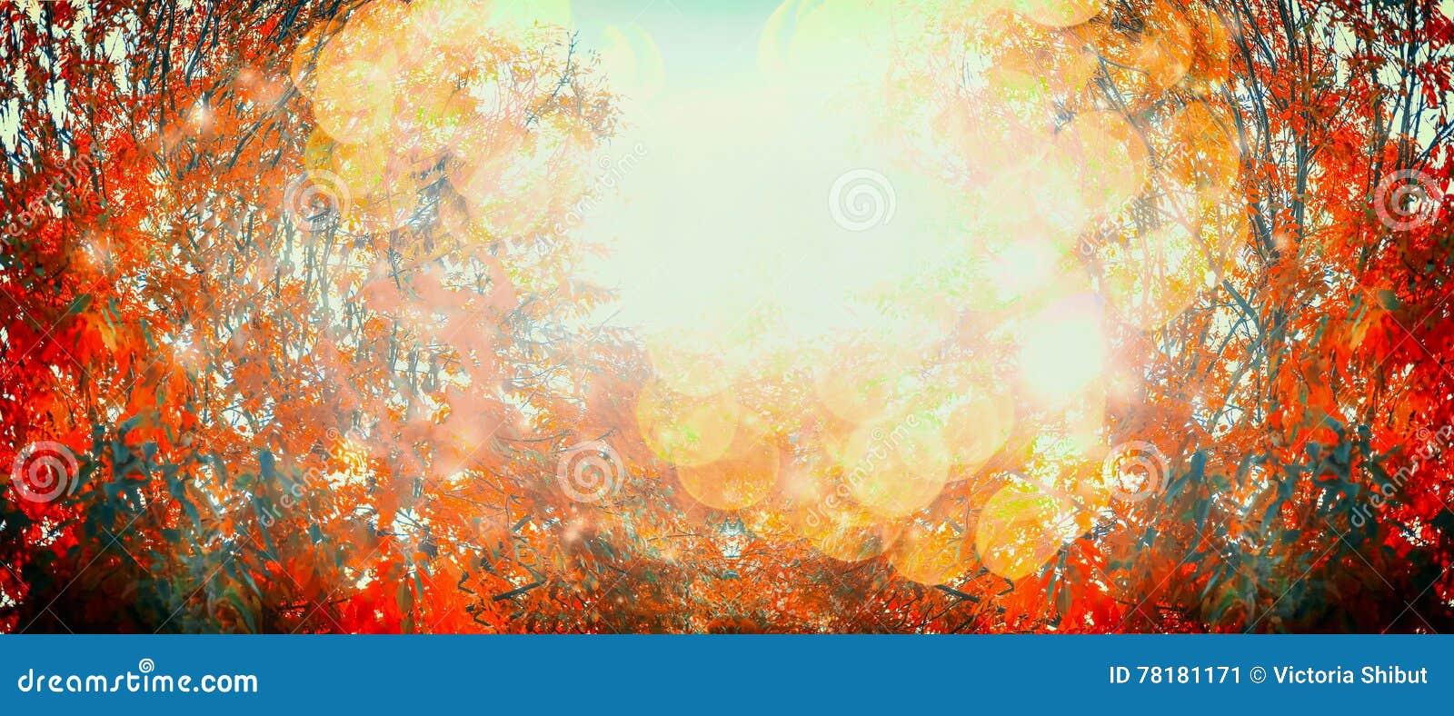Mooie de herfstdag met rood dalingsgebladerte en zonlicht, openluchtaardachtergrond, banner