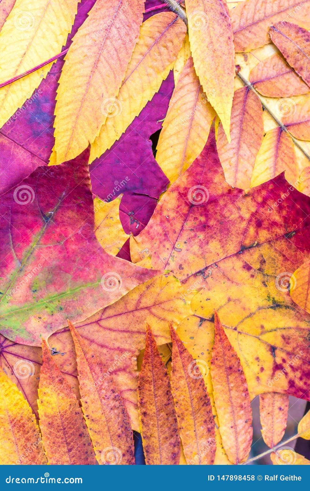 Mooie de herfstkleuren van gevallen bladeren